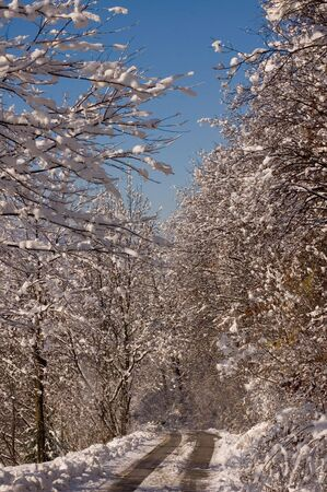 ble: Shot of winter landscapes with snow on trees