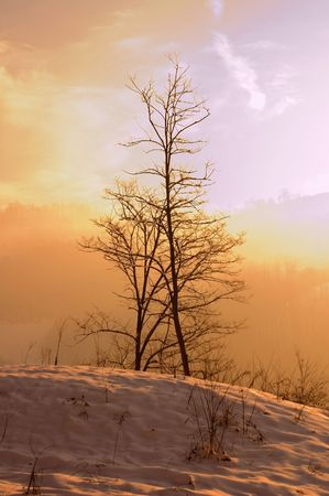 Winter landscapes with lonely frozen tree in the morning photo