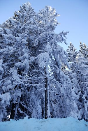 Snow covered mountains, picture taken on mountain Golija, Serbia-this is Nature Park and Biosphere Reserve  photo