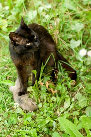 catfood: Cat has caughted mouse on the grass
