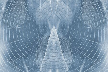 designe: Spider web backgrounds with visiable grain