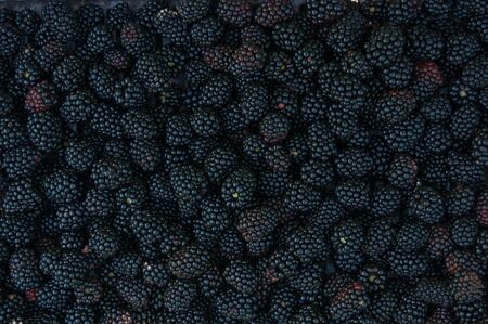 Backgrounds of many of blackberries photo