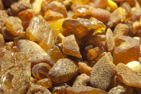 rosin: Raw amber from the shores of the Baltic Sea in the Kaliningrad region