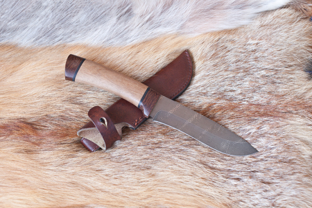 scabbard: sharp hunting knife lies on the skin of a Fox Stock Photo