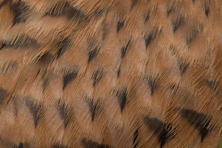 mottled texture of the pen Kestrel Falcon (Falco tinnunculus) close up