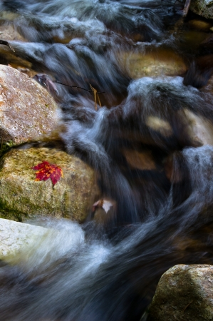 red maple leaf: Autumn red maple leaf on rock beside mountain stream