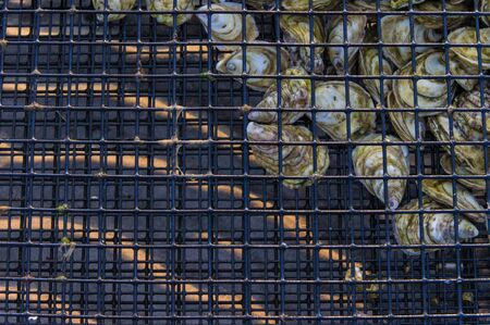 Oysters in cage above sand ripples