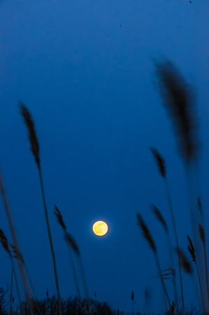 The Moon rises behind the marsh grasses at Plum Island National Wildlife Refuge on the North Shore of Massachusetts Stock Photo
