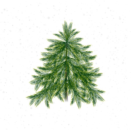 twigs: Christmas tree isolated on white background and snow. Christmas pine twigs and spruce branches.