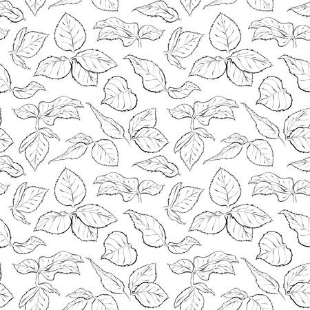 Dibujado a mano sin patrón, con el follaje de la rosa. hoja monocromo. Bosquejo de hojas aisladas sobre fondo blanco. lápiz en blanco y negro o en un esquema de tinta Foto de archivo - 57494432