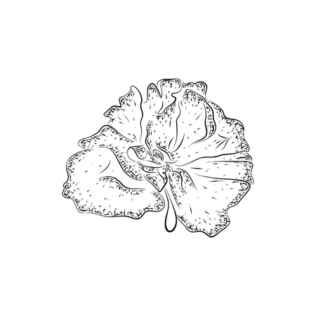 bast: sponge. Cleansers for body care and hygiene. Detailed sketch of wisp of bast isolated on white background.  Black and white pencil or ink drawing Illustration