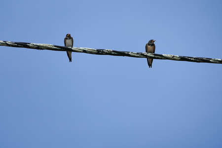 Two Birds on an electric wire at Ponte De Lima in Portugal. Stock Photo