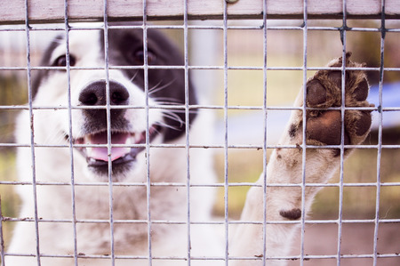 ove: Young dog smiling ove the cage fence