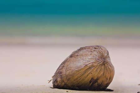 Falling coconut at Surin Island In Thailand photo