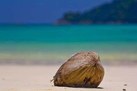 coconut crab: Falling coconut at Surin Island In Thailand