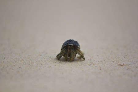 Hermit Crab at Surin Island in Thailand