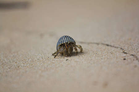 Hermit Crab at Surin Island in Thailand photo