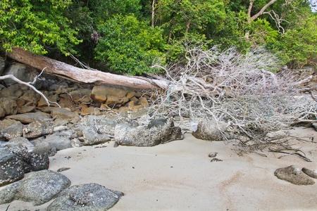 land slide: Land Slide