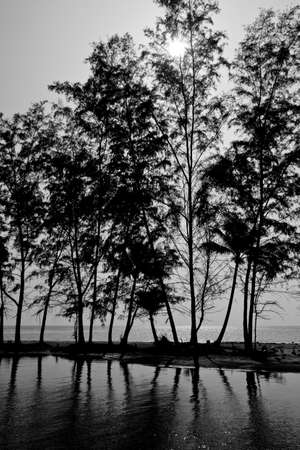 klong: Seascape and tree near Klong Chao canal at Kood island