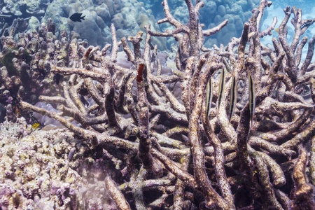 Razorfish at Surin national park in Thailand Stock Photo - 16854031