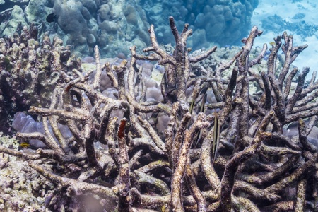 Razorfish at Surin national park in Thailand Stock Photo - 16854033