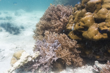 Soft coral at Lipe island in Thailand Stock Photo - 18139130