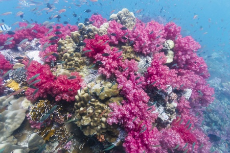 soft corals: Soft coral at Lipe island in Thailand