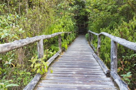 Wooden bridge  in the forest of Doi Inthanon National Park in Thailand