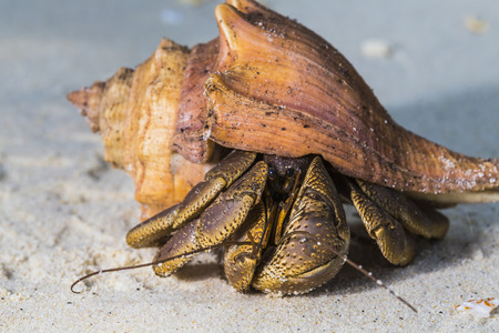 Hermit Crab at Surin national park in Thailand