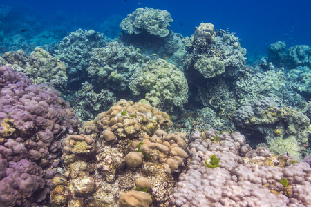 Coral reef at Surin national park in Andaman Sea, Thailand photo