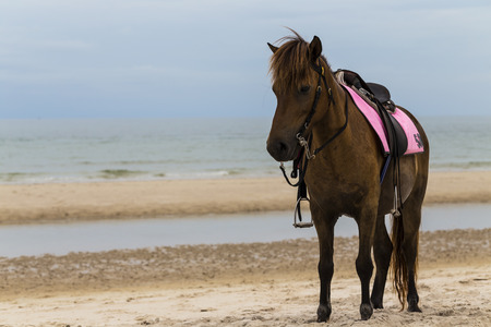 contemporaneous: Brown cavallo sulla spiaggia, Thailandia Archivio Fotografico