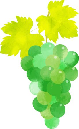 Green Muscat Grapes Fashionable illustrations of watercolor with a sense of transparency