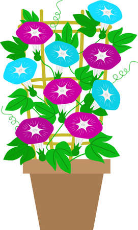 Illustration of a morning glory potted plant