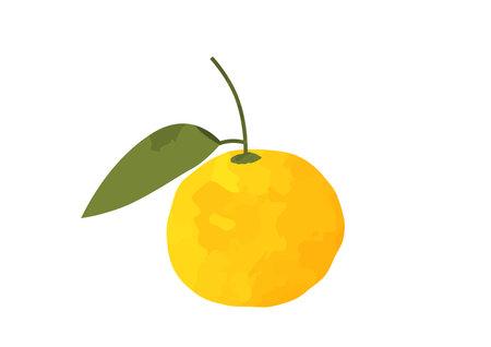 Japanese Citrus Yuzu