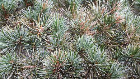 Garden tree Reklamní fotografie