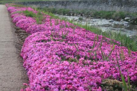 Beautiful and harmonious scenes of nature Stock Photo