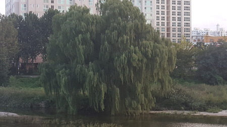Scenery of waterfront