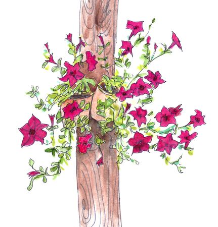 Watercolor full-color drawing of flowering burgundy petunias bushes in pots hanging on a pillar on a white background Standard-Bild