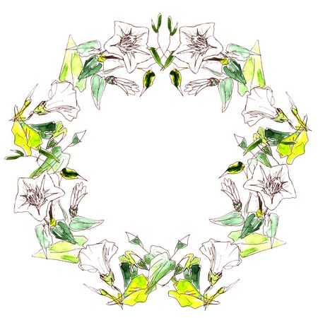 wreath of white tender bindweed painted by watercolor and liner on a white background