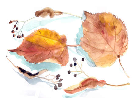 autumn lime leaves and fruits, botanical sketch, watercolor drawing. High quality illustration Banco de Imagens