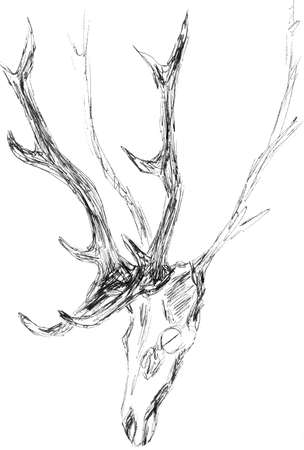 hunting trophy, wall decoration, antlers and skull of a deer, graphic black and white pattern, travel sketch. High quality illustration