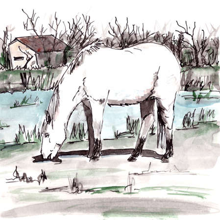 white horse from Camargue in the south of France grazes near a pond, graphic watercolor drawing, travel sketch. High quality illustration