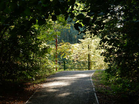 road goes out of the dark forest to the sunny clearing Stock fotó