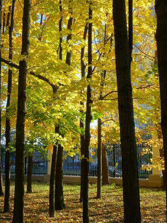 maple, autumn maple foliage against the sky, selective focus. High quality photo