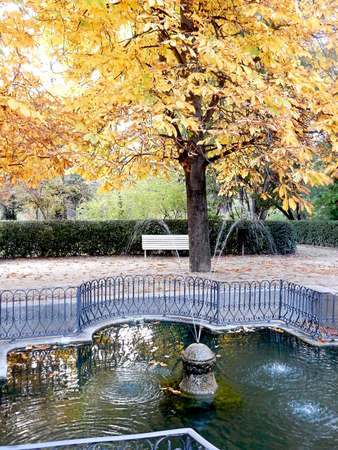 fountain and horse chestnut in autumn park, selective focus. High quality photo 免版税图像