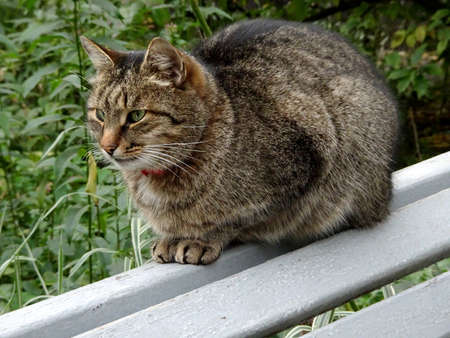 cat sits on a garden bench, selective focus. High quality photo Zdjęcie Seryjne