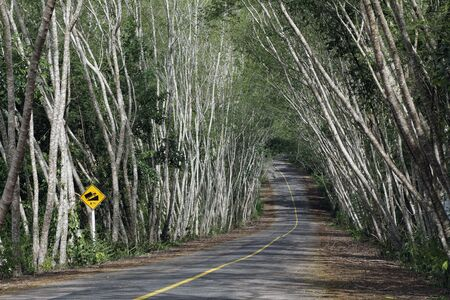 kaeng: Road in Kaeng Krachan National Park