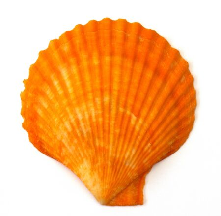 Sea shell on white background  photo