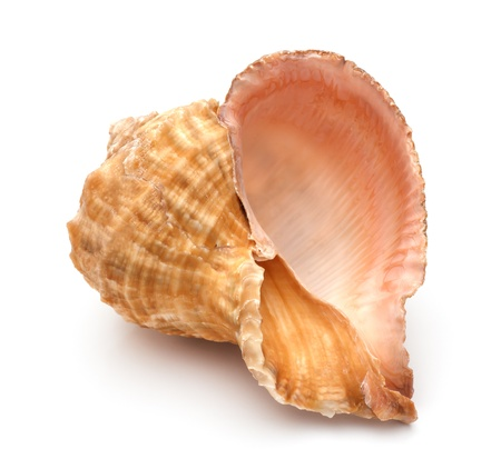 close up of a seashell on white background  photo