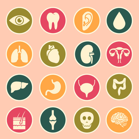 internal: human organs icon Illustration